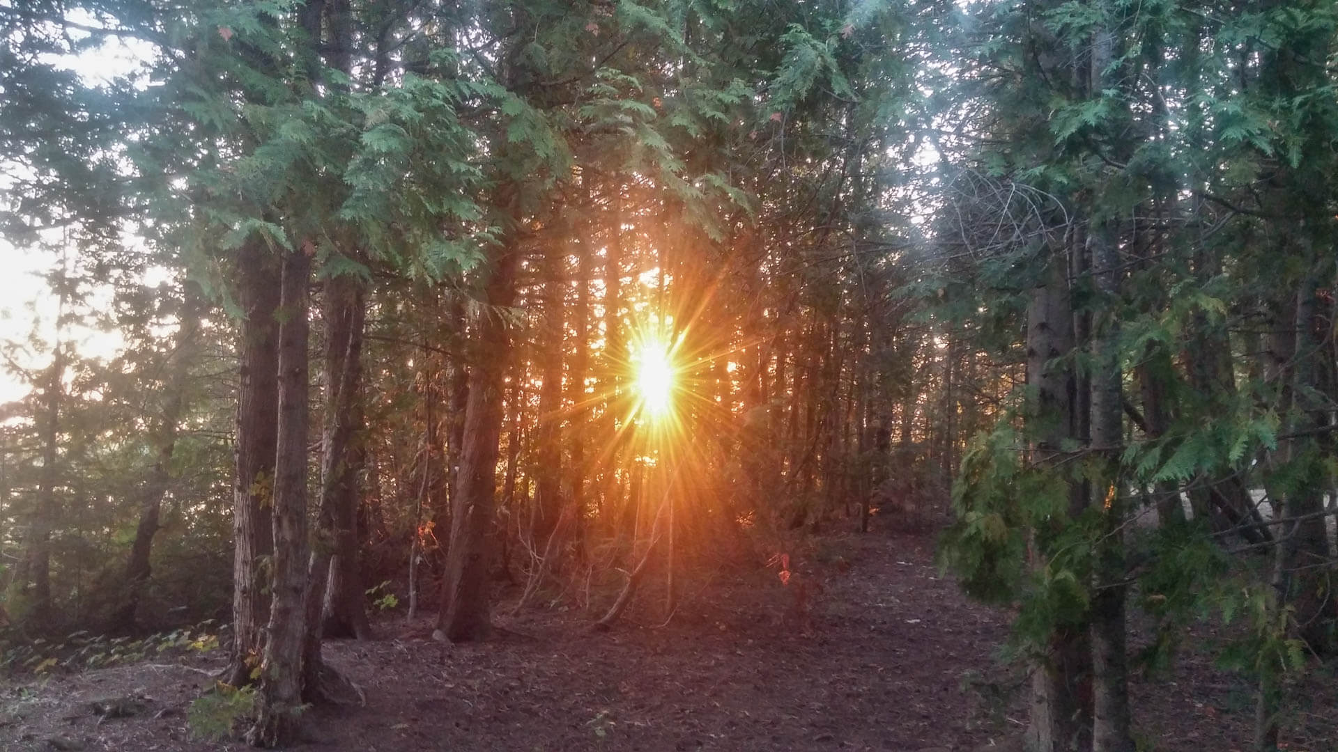 sunset through trees